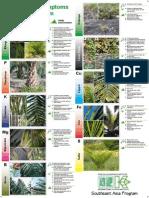 OilPalm-NutrientDefSymptoms