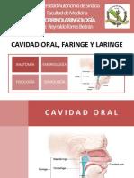 Cavidad Oral, Faringe y Laringe 1.2