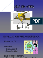 Cirugia en Aves