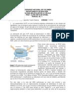 Parcial 1 Biomolecular