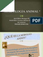 MORFOLOGÍA ANIMAL