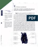 Guía Sist Circulatorio y Sangre