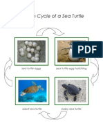 Montessori Lifecycle of a Sea Turtle