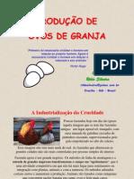 Ovos de Granja