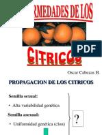 Enfermedades Citricos_Oscar Cabezas