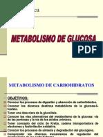 8. Metabolismo de Glucosa