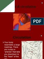 Blood & Circulation (1)