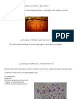 exposicion tejidonervioso