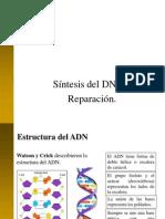 09_sintesis del DNA. Reparación