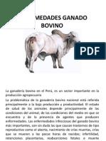 enfermedadesganadobovino-130313124635-phpapp01