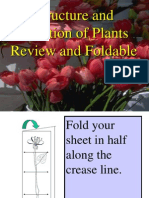 plant-review-foldable instructions and notes ppt