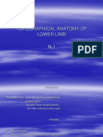 Topographical Anatomy of Lower Limb