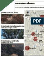 Nuestro bosque nativo se ve amenazado por la proliferación de plantas extranjeras