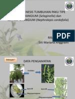 Embriogenesis Tumbuhan Paku Tipe Eusporangium (Selaginella)