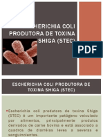 Escherichia Coli Produtora de Toxina Shiga (STEC