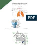 Fonética y Fonología segmental-handout-2014