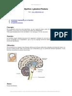 hipofisis-pituitaria.doc
