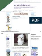 Blog de Perros Miniaturas_ Cómo diferenciar el Bichón Maltés de otros perros similares