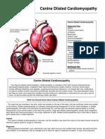 Canine Dilated Cardiomyopathy En
