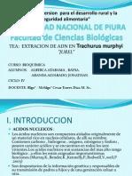 Tea Biokimika