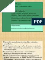 1191799738.Tema 4. Tejidos II (3-Secreción) (1)