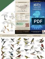 Guia Aves Comunes