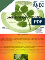Diapositivas Cilantro
