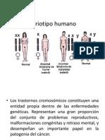 Cariotipo Humano Clase 4