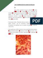 Hepatitis Con Cuerpos de Inclusion en Pollos