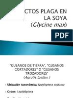 Insectos Plaga en La Soya Cr