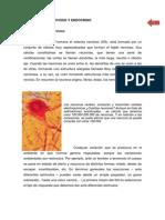 sistema_nerviso_endocrino..pdf