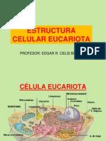 2-organeloscelulares-110313091424-phpapp01