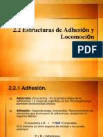 Clase Adhesion y locomoci-¦ón