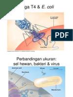 Genetika Virus Dan Bakteri