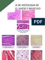 Practica de Histologia de Cartilago, Hueso y