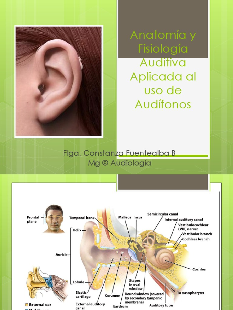 Anatomía-fisiología aplicada a audífonos