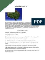 Măiestria fertilizării solului (Partea I)