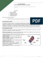 Guía de Macroformas de Chile