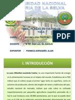 Exposicion de Plagas en Yuca