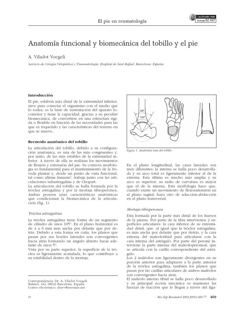 Bonito Anatomía Interna Del Tobillo Adorno - Imágenes de Anatomía ...