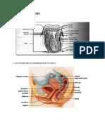 Atlas Anatomi