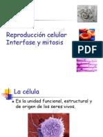 INTERFASE, MITOSIS MEIOSIS 2014.pdf