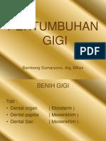 Pertumbuhan Gigi 1