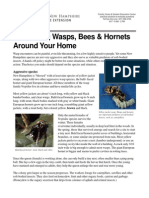 Controlling Wasps, Bees & Hornets
