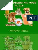 Ética Cristã - bioética relacionada aos animais