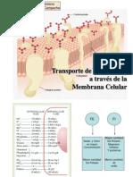 Transporte Membrana Celular Presentacion