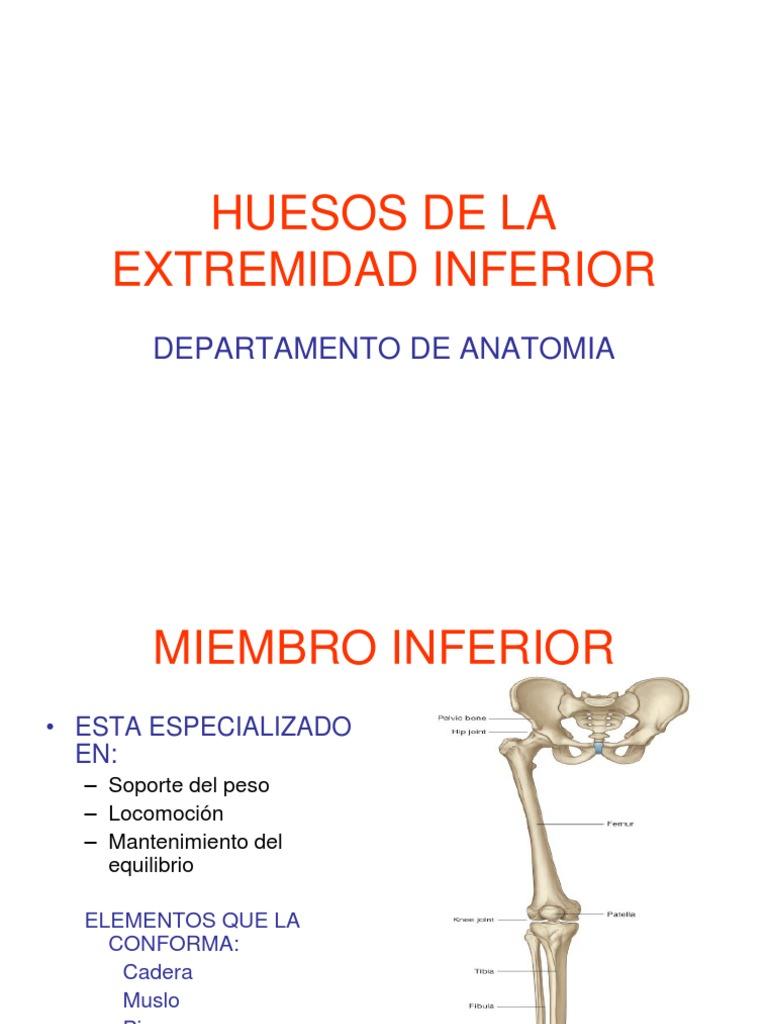 Huesos de La Extremidad Inferior