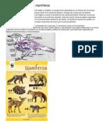 Circulación en aves y mamíferos