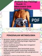 _metabolisme Dan Pemakanan