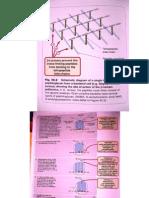 Cefalosporine Macrolide Lincos Aminoglic